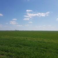 Готовый агробизнес в Красногвардейском районе